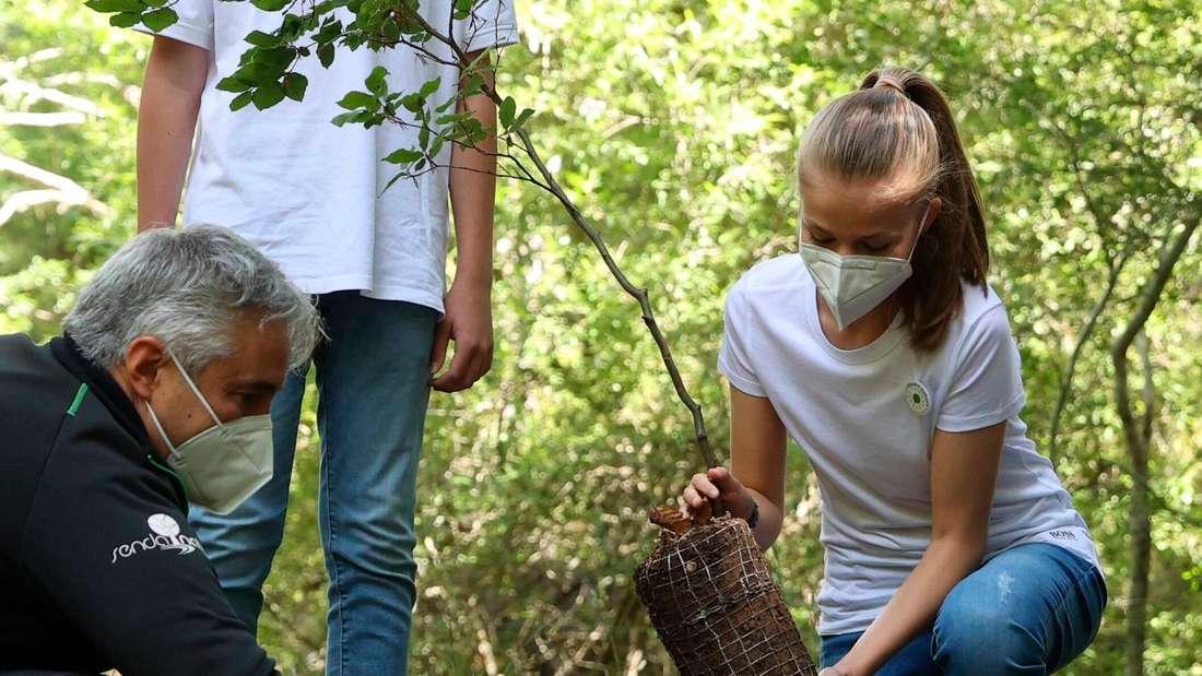 Kronprinzessin Leonor von Spanien pflanzt einen Baum ein.